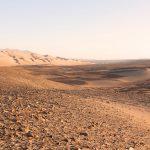 Woestijngruis in ondergaande zon