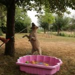 hond waterpret