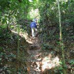 klimmen in jungle
